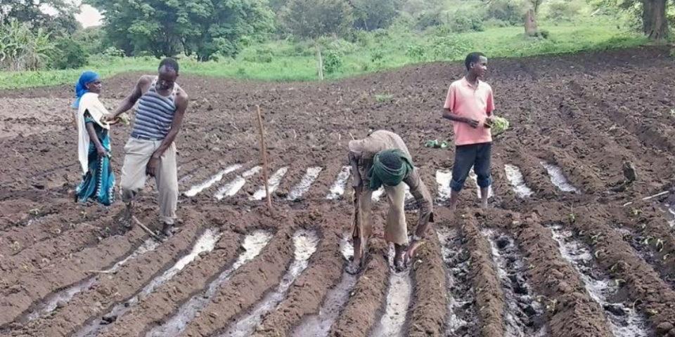 Irrigation_Caritas_Ethiopia_2016